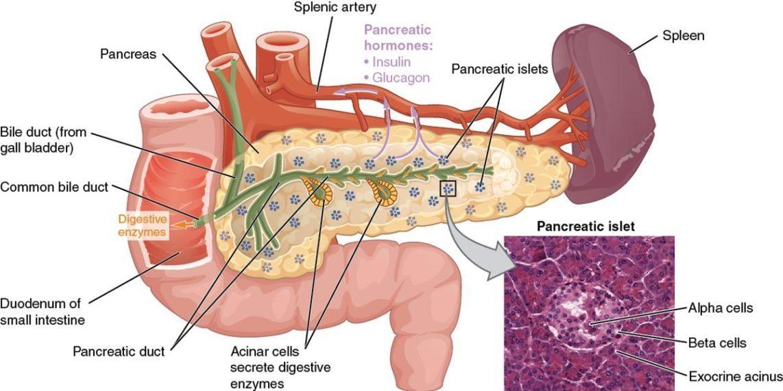 pamje e organeve te tretjes