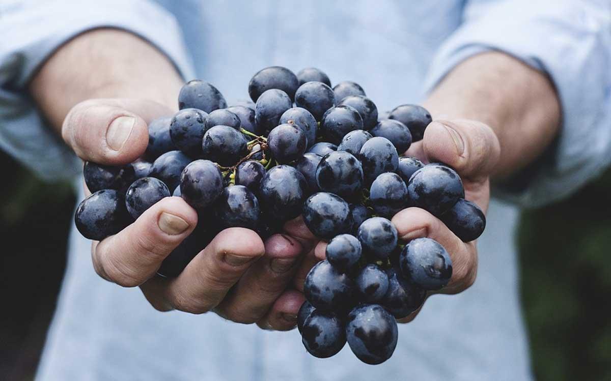 frutat rrushi perpjekja