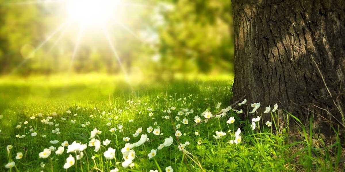 lulet lulja virtytet