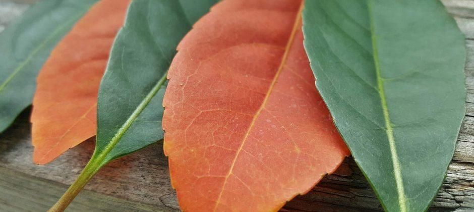 leaves-1380698_1280