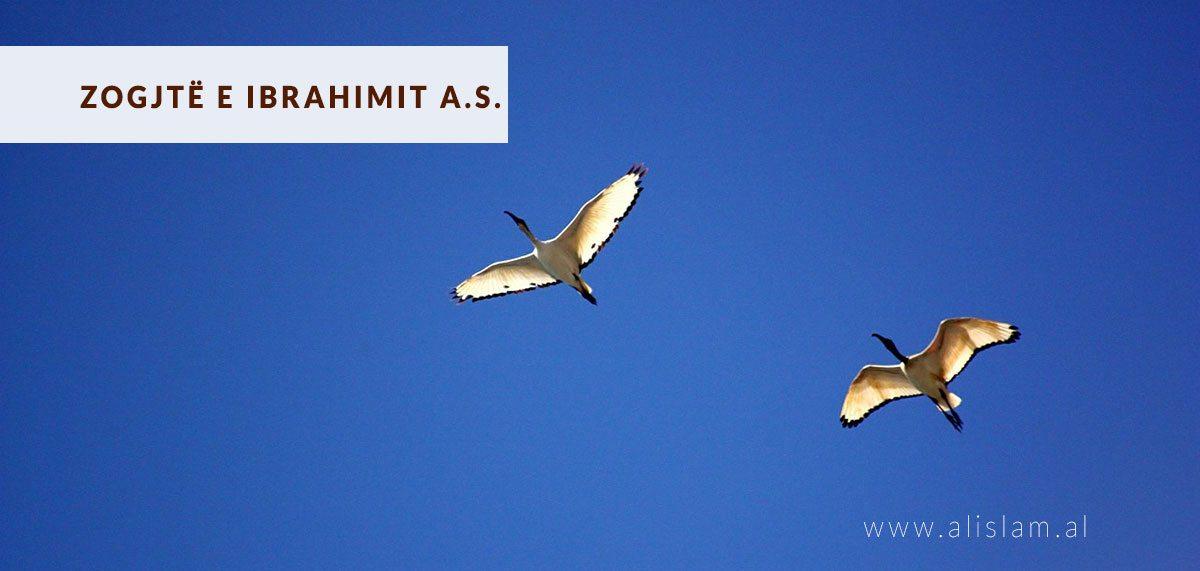 zogjte e ibrahimit