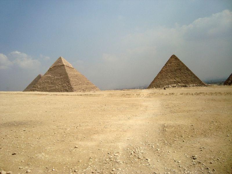 lutja faraoni mizor
