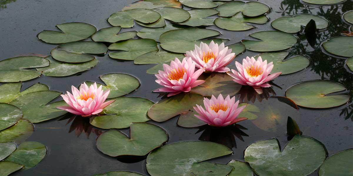 moralet lule lotus instinkti