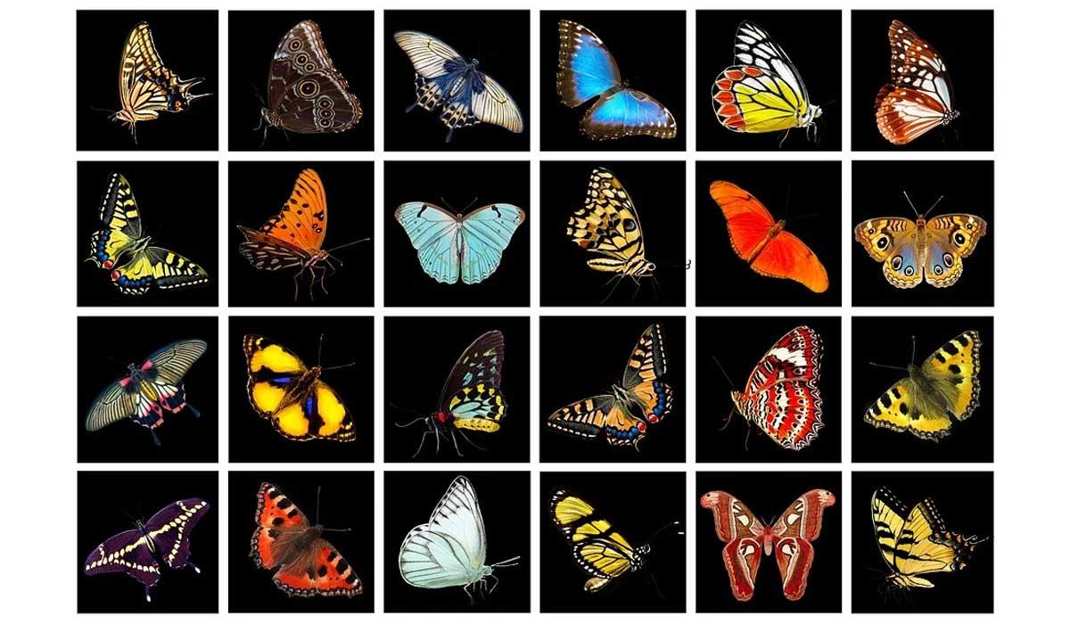 seleksionimi natyror perzgjedhja natyrore